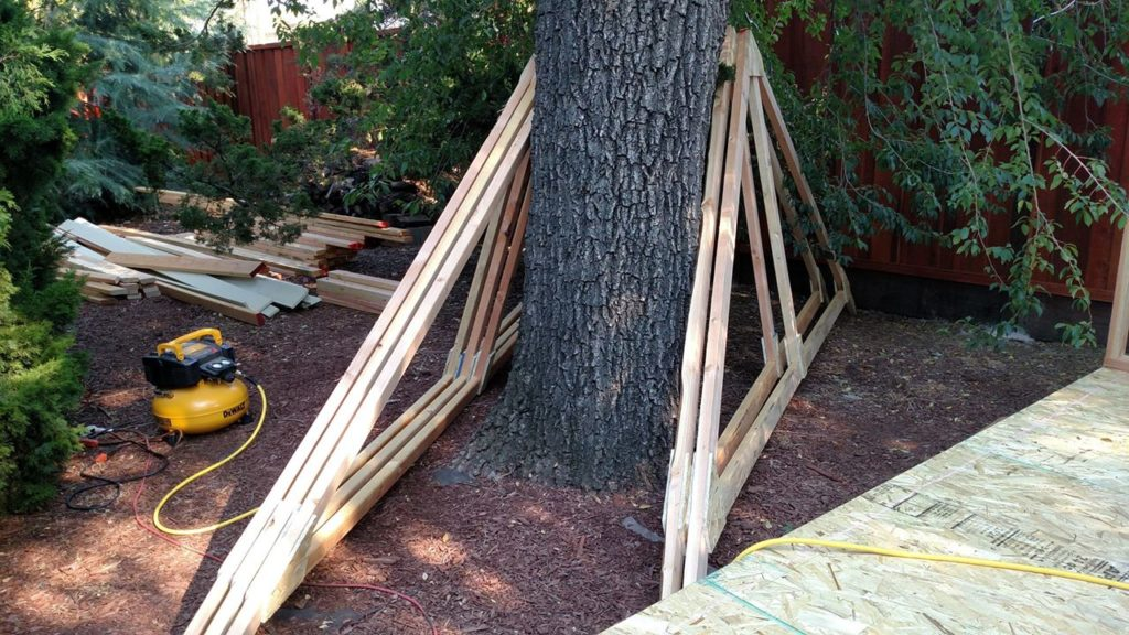 Giant rafters propping up a giant tree